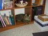 Aliceonbookshelf
