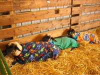 Sheep_in_blankets